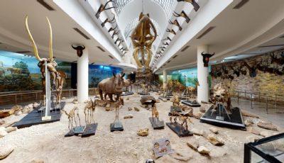 Зоологический музей в зоопарке Гизы